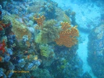 Sea fans, featherstars and urchins on the rocky bottom