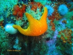 Red sea star holding on tight