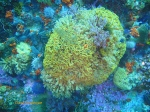 Coral and sea fans