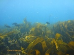 The top of the pinnacle is overgrown with kelp